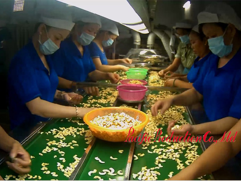 Worker processing cashew nuts