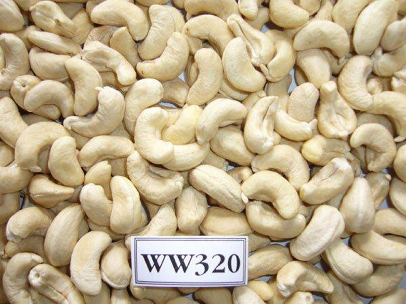 Cashew nuts WW320 processing in Pacific Production Co., Ltd